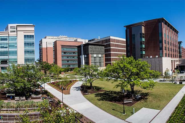 The MUSC Campus