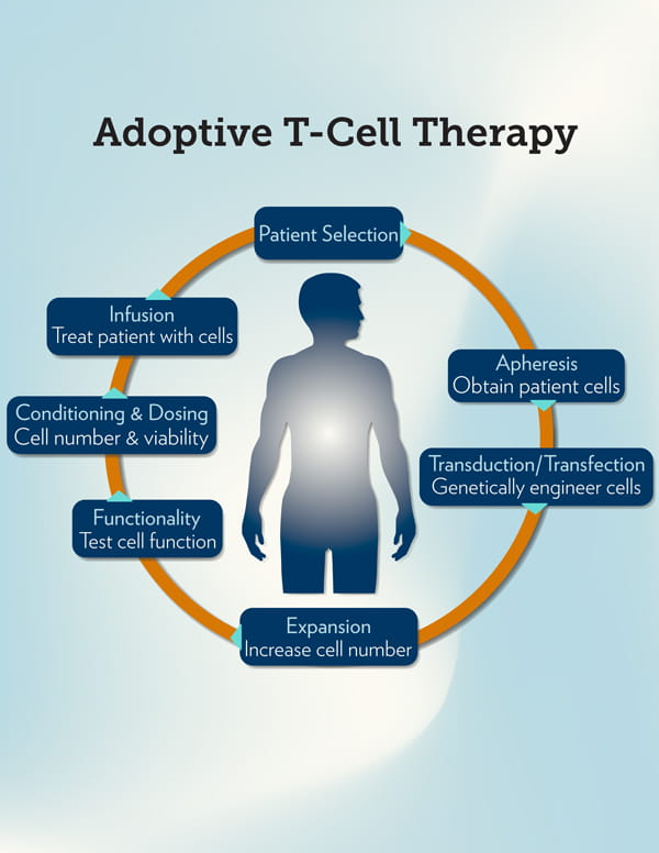 Adoptive T Cell Therapy Diagram