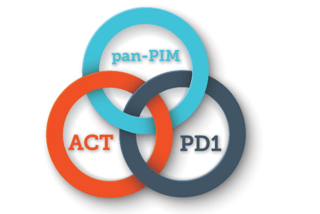 Illustration depicting three different colored interlocking rings. Beginning in clockwise order: An orange ring labeled Adoptive Cell Transfer (ACT), a teal ring labeled pan-PIM, and a grey ring labeled PD1.
