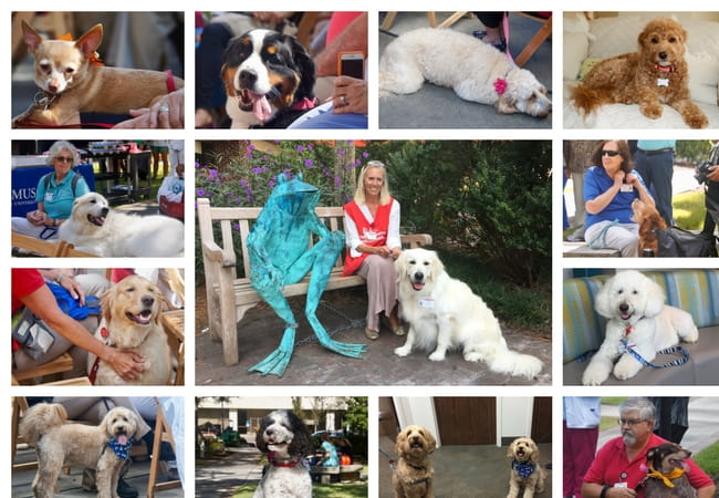 Is your dog ready to become a Therapy Dog? Collage of MUSC therapy dogs.